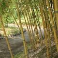 Photos: 少しでも涼しさを・・竹林園