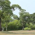 竹林園の広場誰もいない