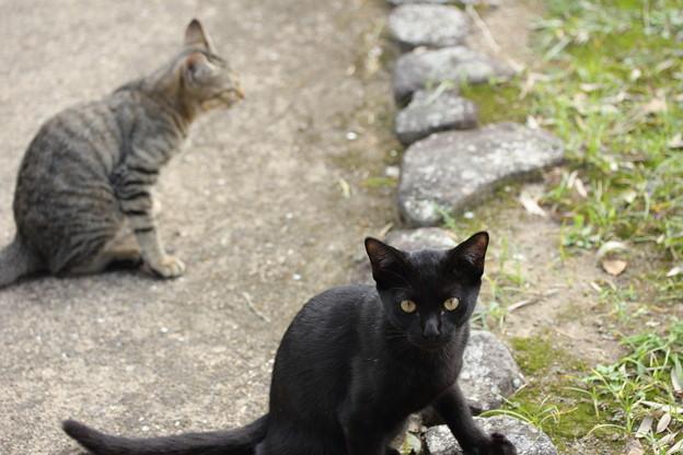 寄って来るノラ猫・・竹林園