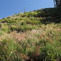 Photos: ススキが咲きだす・・中尾山からの山道