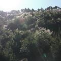 Photos: ススキ・・中尾山からの山道