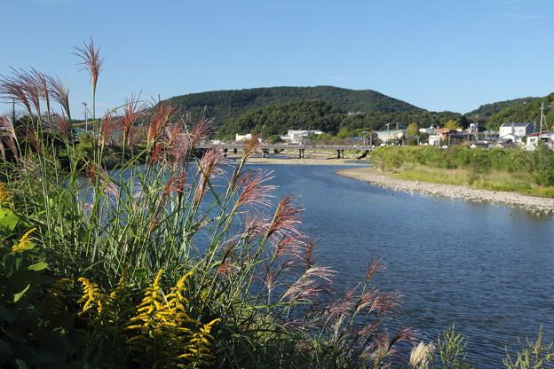 秋はススキ・・水俣川