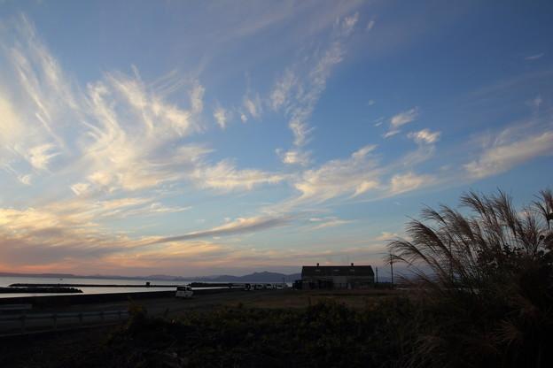 ススキ・・丸島漁港