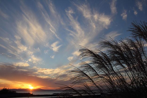 夕日とススキ・・丸島漁港