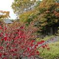 Photos: 竹林園の紅葉