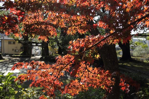 早い紅葉・・諏訪神社
