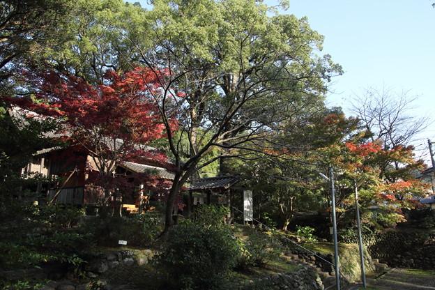 諏訪神社の紅葉・・長野
