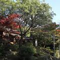 Photos: 諏訪神社の紅葉・・長野