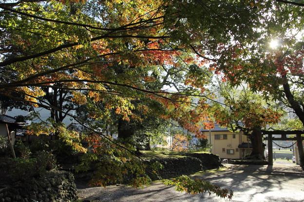 こっちの紅葉はまだ・・諏訪神社