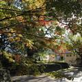Photos: こっちの紅葉はまだ・・諏訪神社
