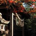 Photos: 諏訪神社・・長野
