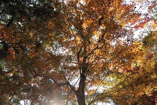 残っている紅葉・・住吉神社