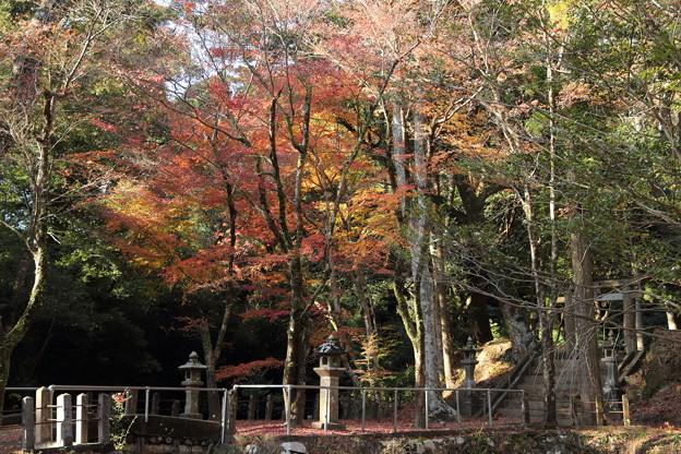住吉神社の紅葉・・越小場