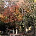 Photos: 住吉神社の紅葉・・越小場