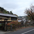 Photos: もう紅葉が散ってます・・湯の鶴温泉