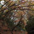 Photos: 湯出神社の紅葉