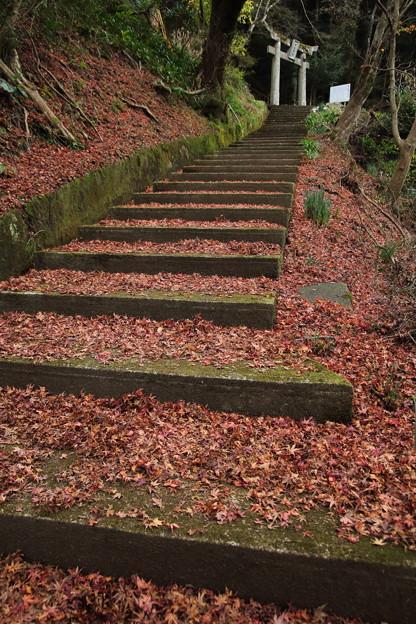 湯出神社の落ち葉