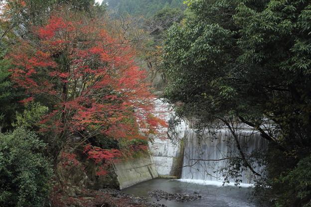 湯出神社の近くの川の紅葉