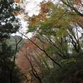 Photos: 湯出神社・・青葉も多い