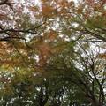 Photos: 紅葉・・城山 日差しもないので暗い