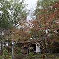 Photos: 紅葉・・諏訪神社もう過ぎていました