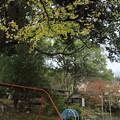 Photos: 紅葉・・諏訪神社