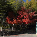 竹林園の紅葉・・裏入口