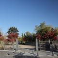 紅葉・・竹林園正面入口