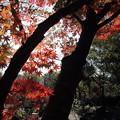 紅葉・・竹林園