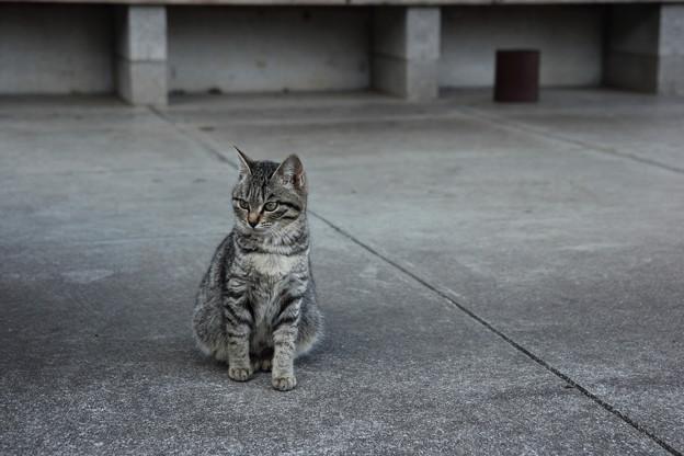 猫・・遊歩道