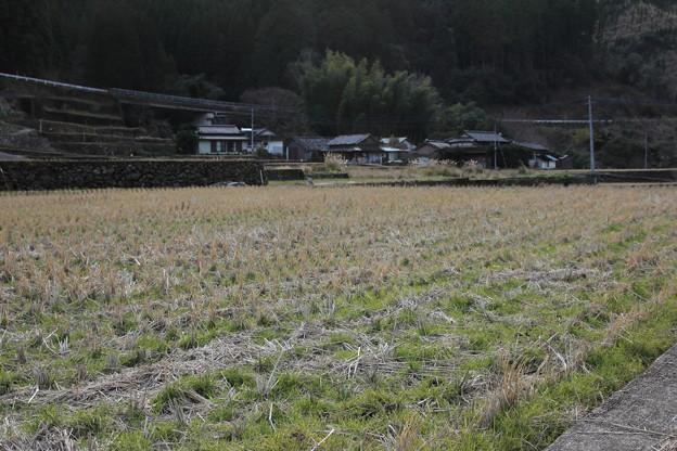 田んぼの冬