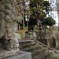 Photos: 狛犬・・陣内阿蘇神社