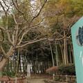 冬の竹林園(裏入口)