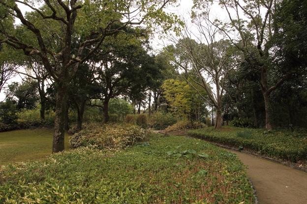 冬の竹林園