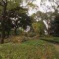 Photos: 冬の竹林園