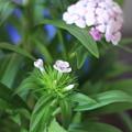 写真: 新しい花