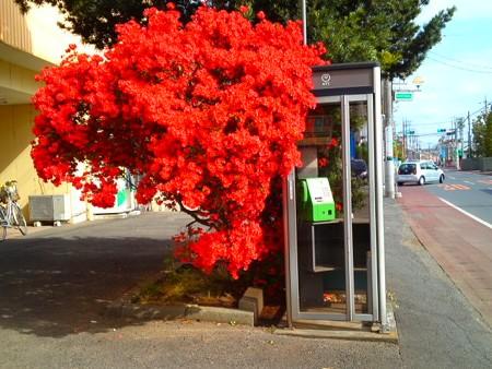 ツツジ電話ボックス