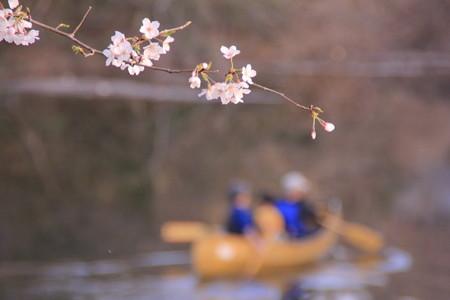 ボートと桜