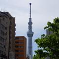 Photos: 錦糸公園からスカイツリー