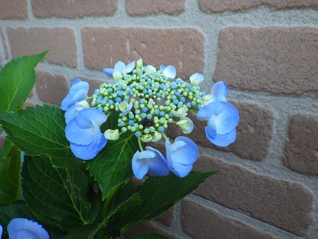 Photos: わたしはわたしの青い色