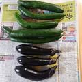 Photos: 親野菜