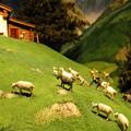 Photos: 駆け登るペーターとヤギたち