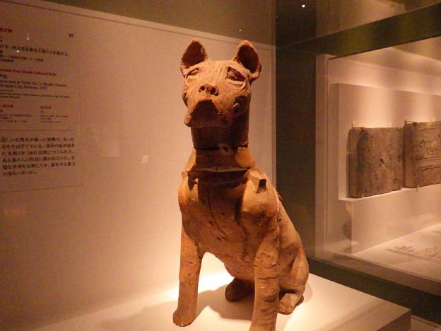 グスマンに似ている蜀犬