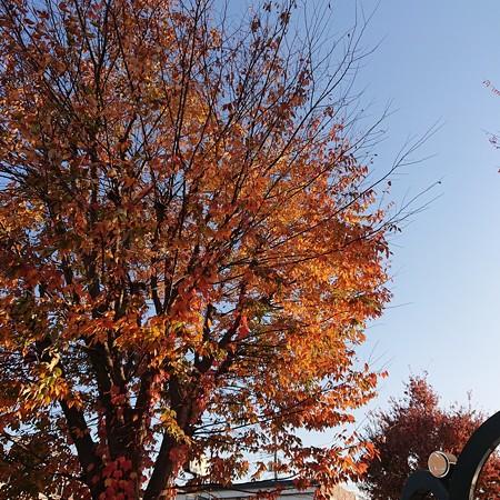 秋はいかがでしょうか