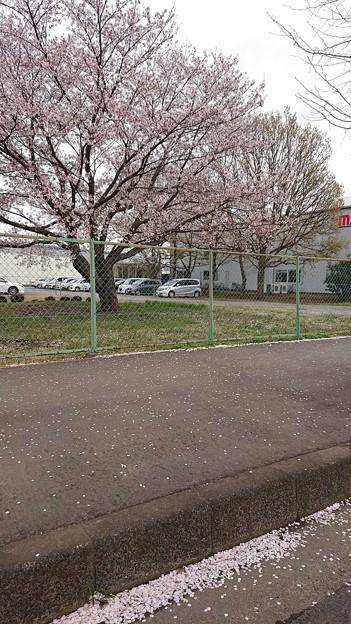 Photos: 車窓の春