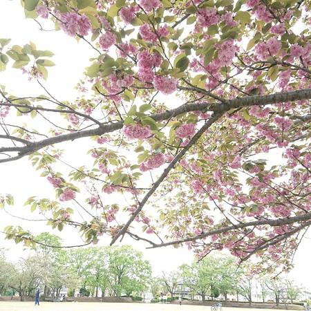 春の名残と初夏の兆し