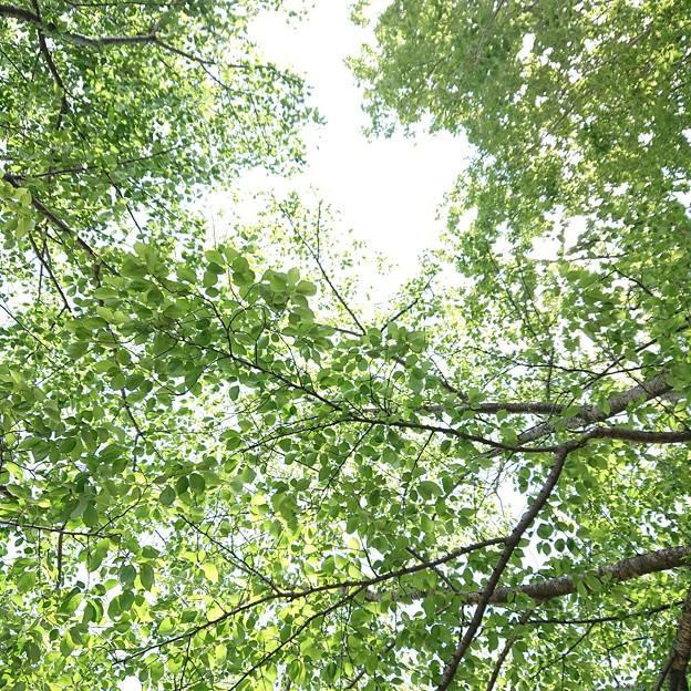 緑風に仰ぐ昼休み