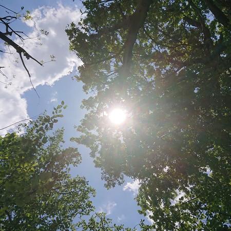 若葉から木漏れ日