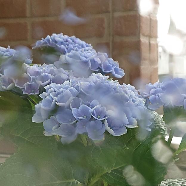 紫陽花色の雨