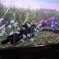 Photos: 花がきれいにそよいでる